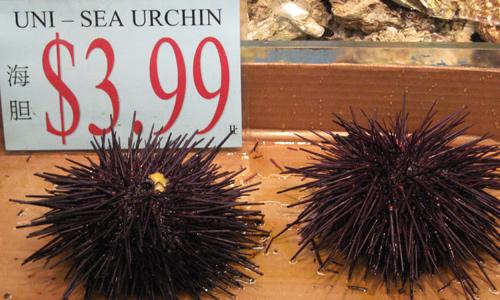 sea_urchin